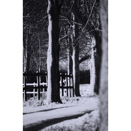 Trees in Snow print